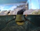 okeanarium_kuala_lympyr3