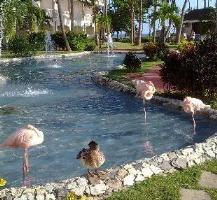 белив гранд фламинго