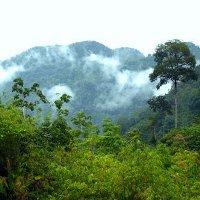джунгли на острове Борнео