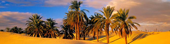 Погода в Тунисе