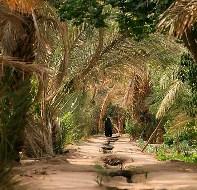 тропики в марокко